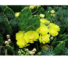 A Thorny Embrace Photographic Print