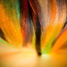 Interwoven Colors by Sam Scholes