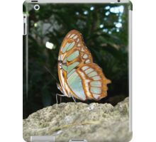 Tailed Jay Butterfly - Wings Closed iPad Case/Skin