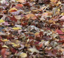 Fallen Leaves,Mount Lofty Botanical Gardens,S.A. Sticker