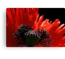 Red Poppy (Macro) Canvas Print