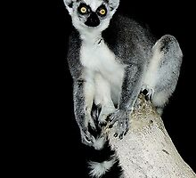 Madagascar King Julian by Paulette1021