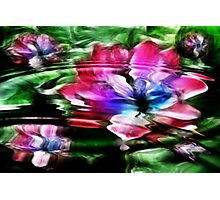 Rippled Water Lily and Bubbles Photographic Print