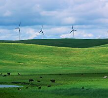 Cattle Grazing Below Turbines by hastypudding