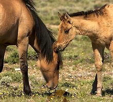"""New Beginnings""- Pryor Mountain Mustangs by Timothy Clark"