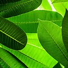 Leaves by Charuhas  Images
