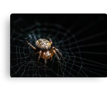 Spider on the Web  Canvas Print