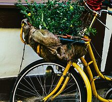 Yellow Bicycle by PatiDesigns
