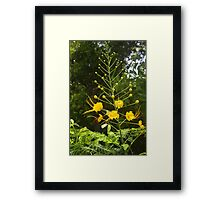 It´s May again Framed Print