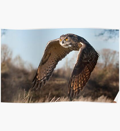 Flight of the Eagle Owl Poster