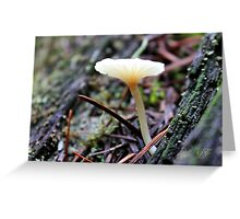Mt. Rainier Mushroom Greeting Card
