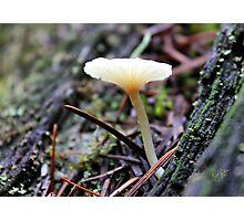 Mt. Rainier Mushroom Photographic Print