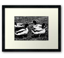 Mallard Ducks Artwork in Black, Gray and White Framed Print