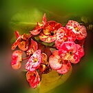 Flowers from Bali by Charuhas  Images