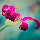 Beautiful Blur by Sarah Beard Buckley