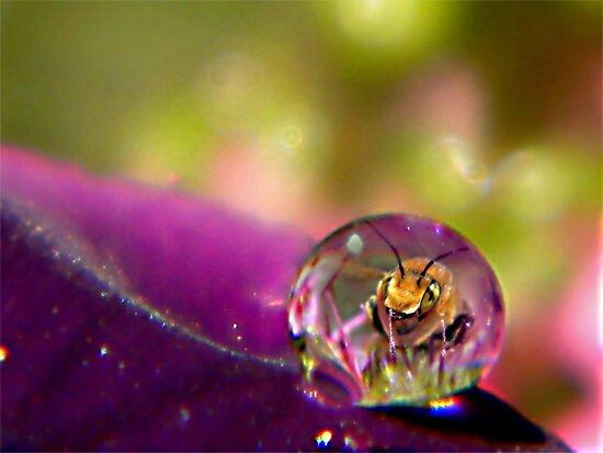 Bee Drop by Shelly Harris