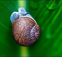 Snail by stephaniellen