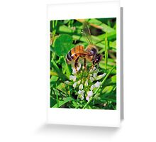 Bee On Flower 0017 Greeting Card