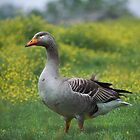"""Big Old Gray Goose"" by Melinda Stewart Page"