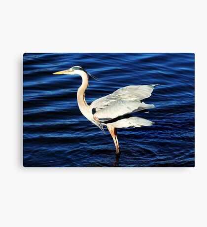 Feeling Good Canvas Print
