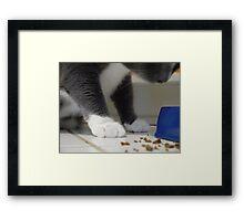 Paws Framed Print