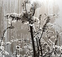 Blossom by Virginia Daniels
