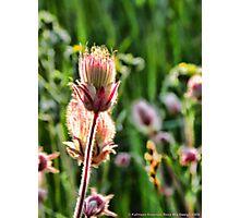 Wildflowers 3 Photographic Print