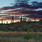 Sunflowers, Sunsets and Cactus by Mike Olbinski