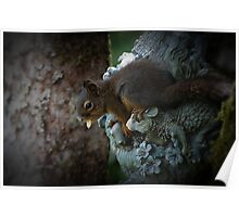 New Critter At Our Bird Feeders Poster