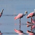 The Pink Plumage Club by Franklin Lindsey