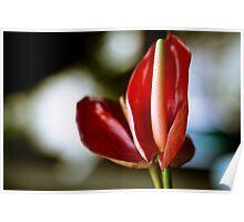Tropical Flower, Ubud, Bali Poster