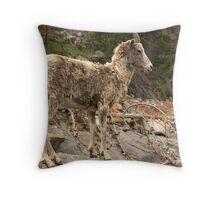 Ewe Rock Throw Pillow