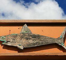 Shark by Mike Warman