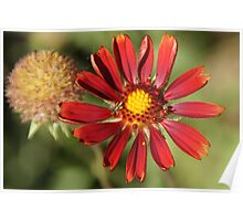 Red flower and flying insect Poster