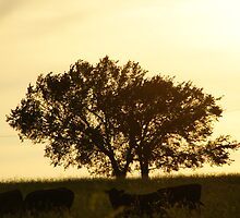 Tree and cattle in Wakarusa by agenttomcat