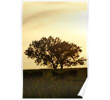 Tree and cattle in Wakarusa Poster