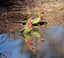 Eastern Rosella by mosaicavenues