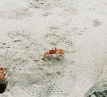 crabs by brian hammonds