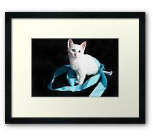 White Kitten with Blue Ribbon Framed Print