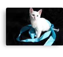 White Kitten with Blue Ribbon Canvas Print