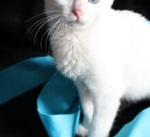 White Kitten with Blue Ribbon Sticker