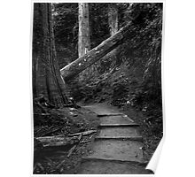 Mount Rainier National Park - Up the Steps and Through the Woods Poster
