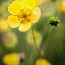Buttercup by JEZ22