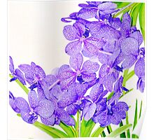 Cute purple green orchids flowers pattern  Poster