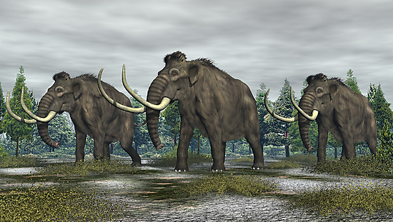 Woolly Mammoth by Walter Colvin