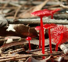 Tiny Red Toadstools by Helena Bolle
