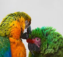 Macaw Bird Green and Yellow Color by Elaine123