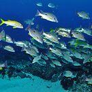 Fish Interaction at The Needles by JimDodd