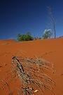 Red sand dune, NT, Australia by Tam  Locke