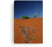 Red sand dune, NT, Australia Canvas Print